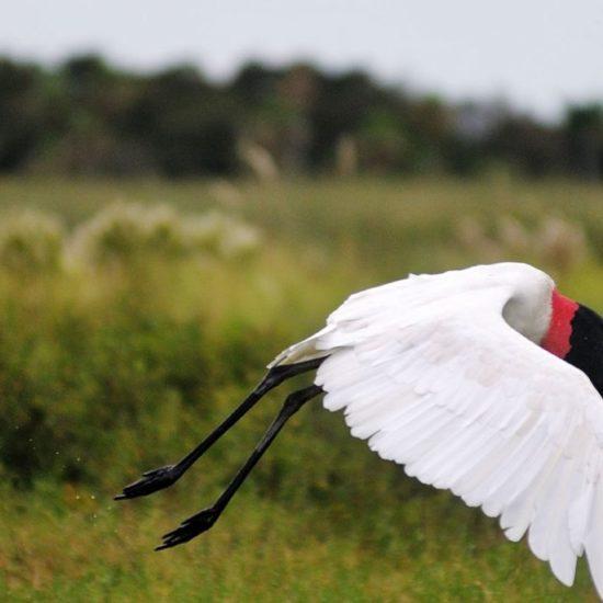 argentine estancia esteros del ibera nature corrientes lac réserve eau douce oiseau blanc observation faune