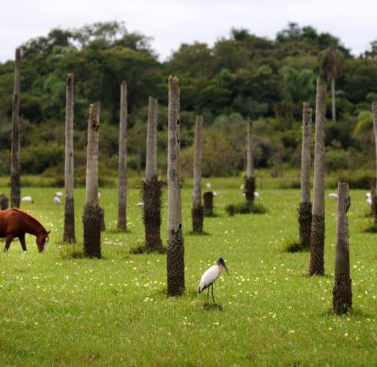 argentine estancia esteros del ibera cheval nature corrientes faune flore