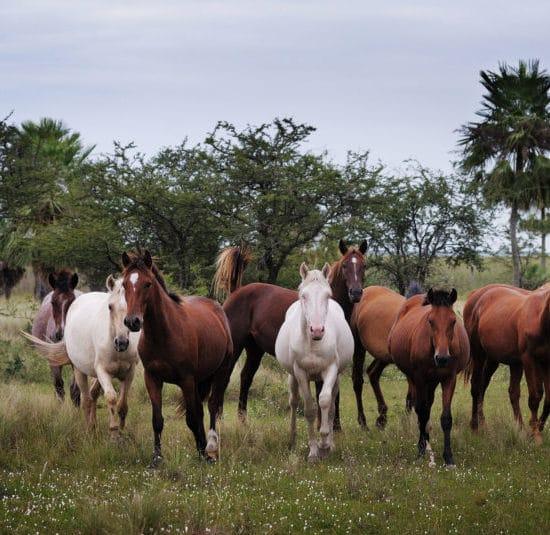argentine estancia esteros del ibera chevaux cheval nature corrientes