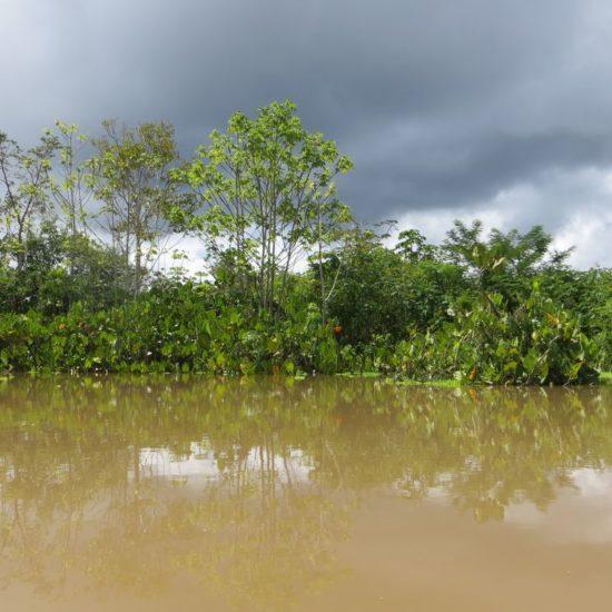pérou iquitos forêt amazonienne amazone fleuve