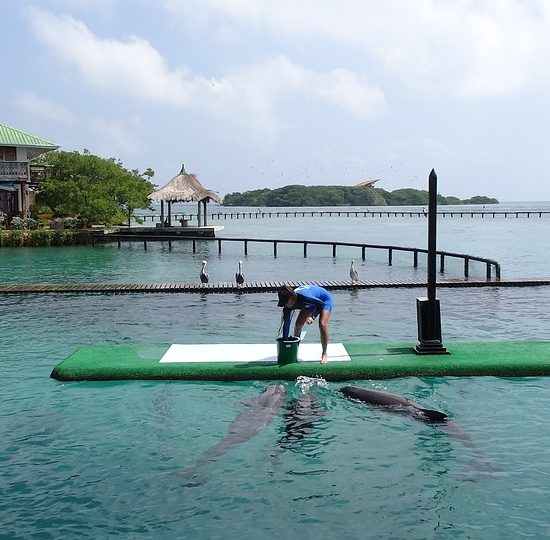 colombie ils baru dauphins immersion faune découverte