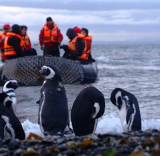 argentine patagonie parc national terre de feu bout du monde nature immersion découverte voyage croisière hostile manchot magellan mer cap horn