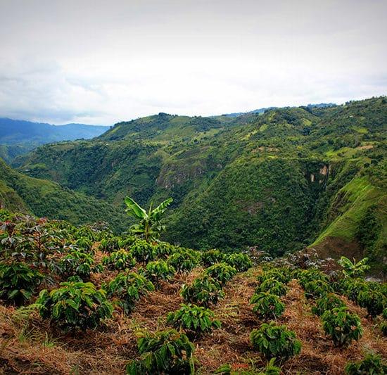 colombie san agustin culture café montagne verdoyant nature