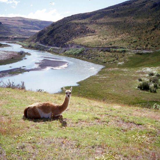 Chili torres del paine patagonie montagne lac nature lama
