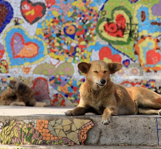 Chili chien valparaiso fresques mosaïques