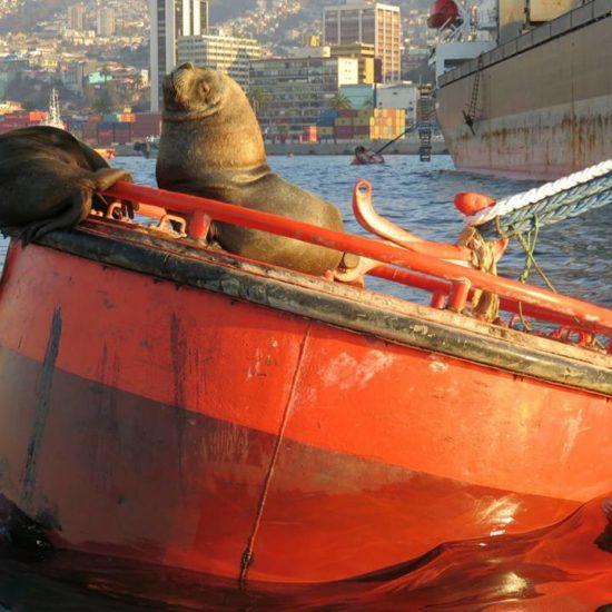Chili valparaiso phoque bateau port