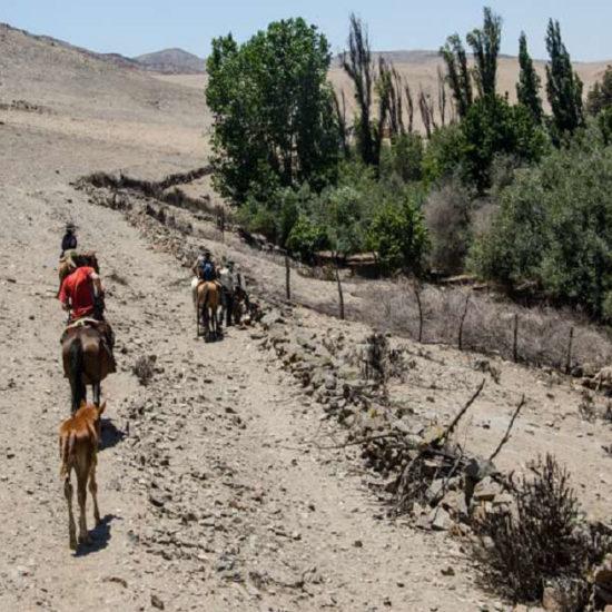 Totoral Chili désert randonnée cheval