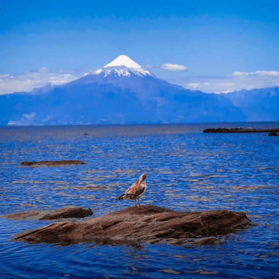 Voyage-Chili-frutillar-circuit-argentine-chili-roadtrip-tierra-latina-photo-by-Hector-Ramon-Perez-on-Unsplash