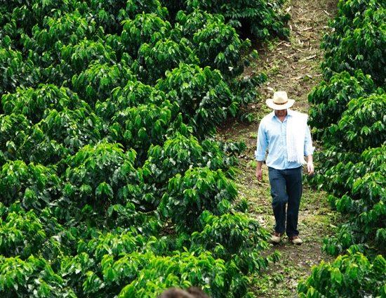 colombie cafe agriculteur culture