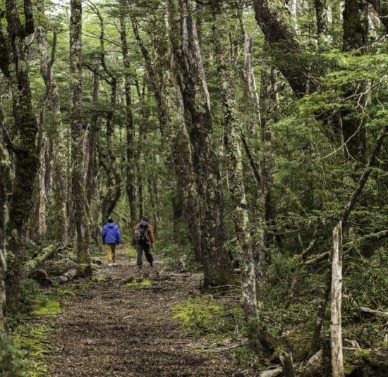 Chili patagonie randonnée forêt