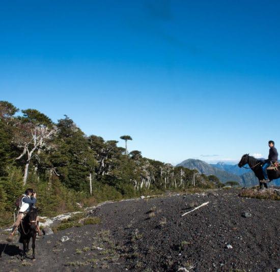 Chili patagonie randonnée forêt cheval