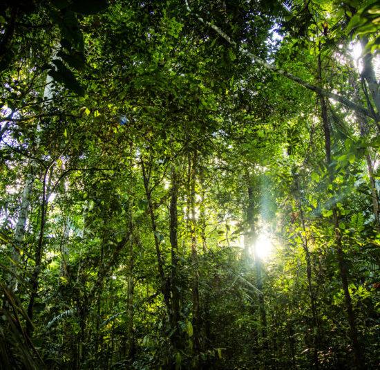 forêt amazonienne pérou puerto maldonado Tambopata River