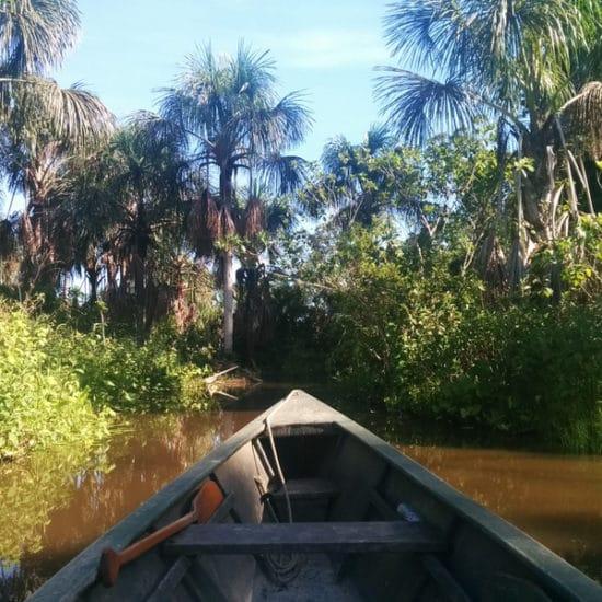 pérou puerto maldonado amazonie