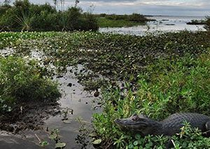 ESTERO_IBERA_ARGENTINE_voyage_sur_mesure_TIERRA_LATINA-crocodiles