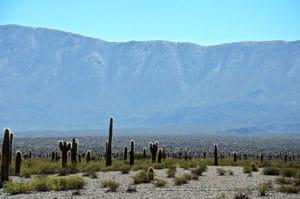 Argentine Cachi Desert de cactus