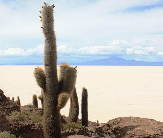 bolivie salar uyuni désert sel cactus nature curiosité