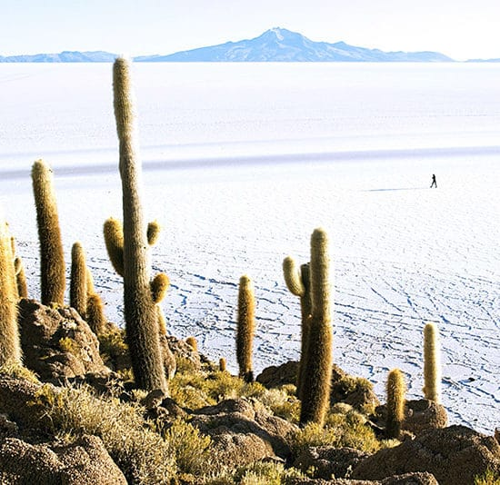 bolivie salar uyuni cactus nature curiosité immersion découverte