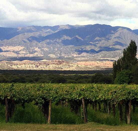 Argentine tucuman montagne verdoyant nature immersion vin vignoble vigne nature