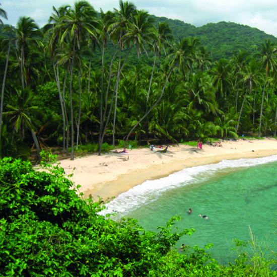 colombie bahia solano plage forêt palmiers