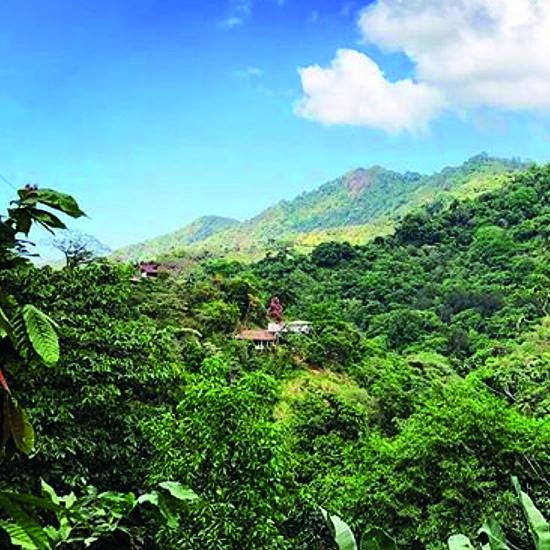 colombie minca forêt nature flore verdoyant