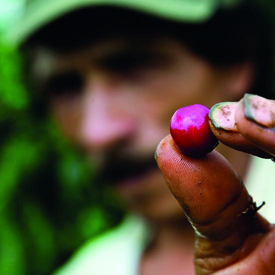 colombie pereira café graine zone cafetière culture agriculture