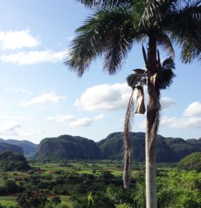 vallée de Viñales, berceau du tabac cubain