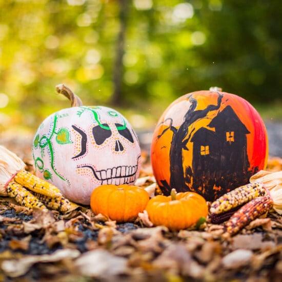 tierra-latina-drew-hays-squelettes-fête-des-morts-dia-de-los-muertos-mexico