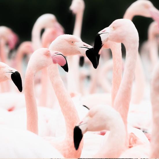mexique ile holbox yucatan caraïbes faune animaux flamants roses rio fleuve lagartos celestun