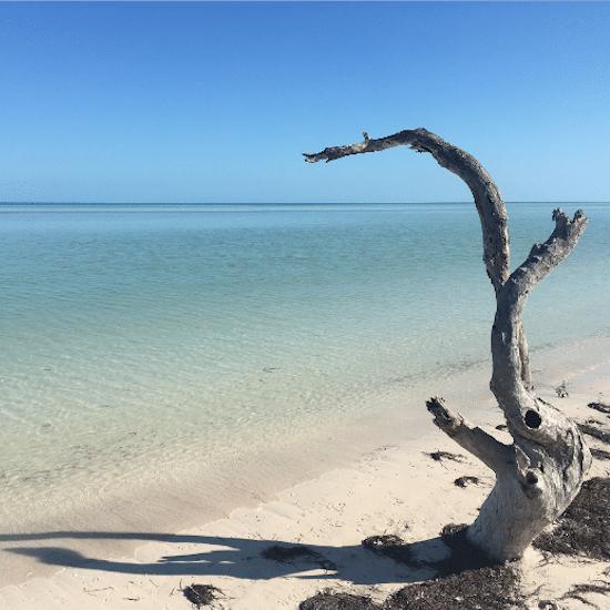 mexique ile holbox yucatan caraïbes mer bleue turquoise plage magnifique paradisiaque arbre mort souche baignade horizon
