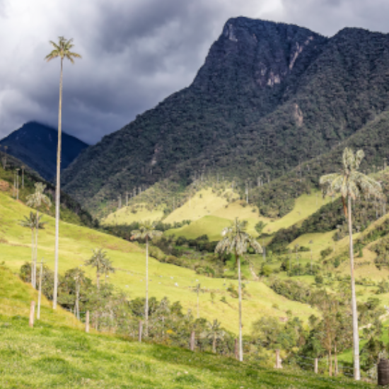 colombie valle cocora palmiers montagne verdure