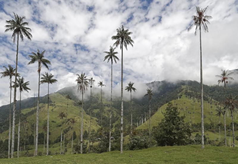 Voyage Tierra Latina Colombie Valle Cocora vignettes