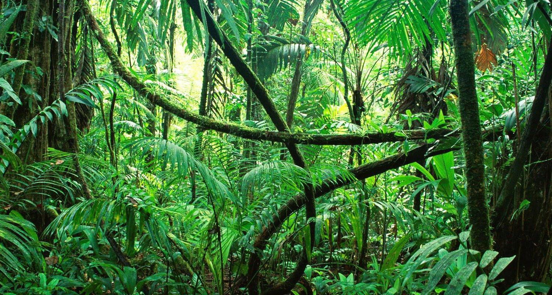 TierraLatina-Mexique-Chiapas-Jungle-Tropicale-Aventure-Nature