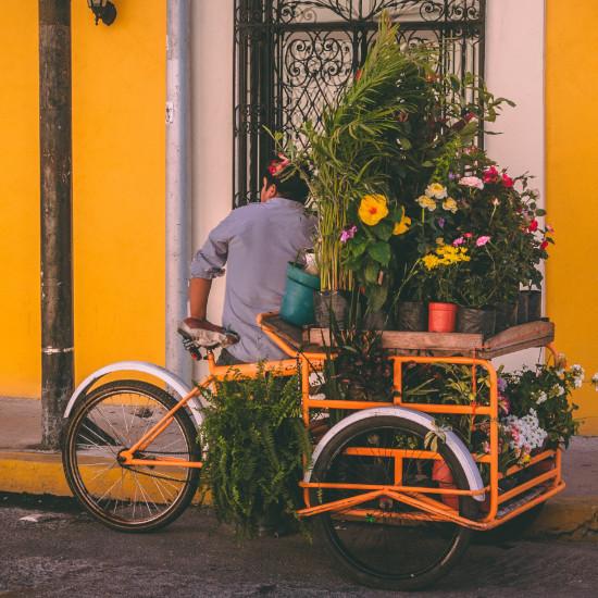 TierraLatina-Mexique-Merida-Yucatan-Fleurs-Couleurs-Marchand-Ambulant