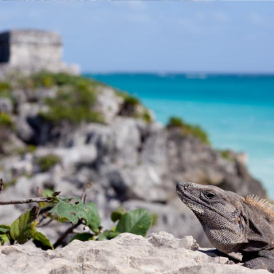 TierraLatina-Mexique-Tulum-Iguane