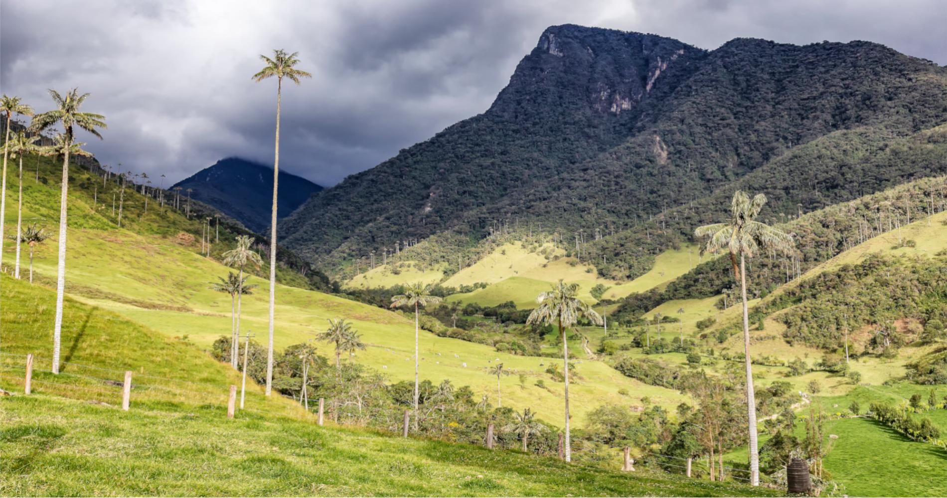 Voyage Tierra Latina Colombie Valle Cocora