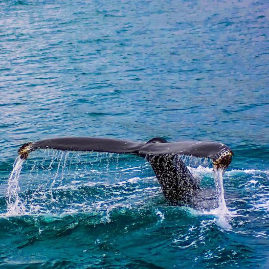Voyage Tierra Latina Colombie Bahia Solano Baleines