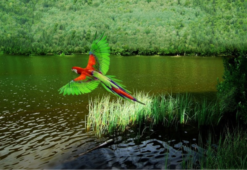 TierraLatina-Amazonie-Ara-Couleur-Brésil-Fleuve-Amazone
