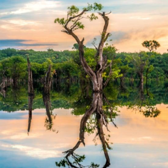 TierraLatina-Amazonie-Fleuve-Arbre-Manaus-Poumon-de-la-terre