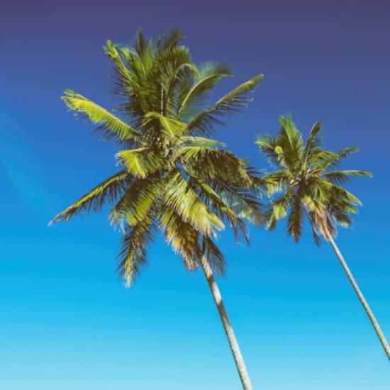 TierraLatina-Brésil-Salvador-Plage-Palmier-Détente-Ciel-Bleu