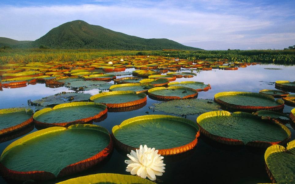 Tierra-Latina-Brésil-Pantanal-Marécage