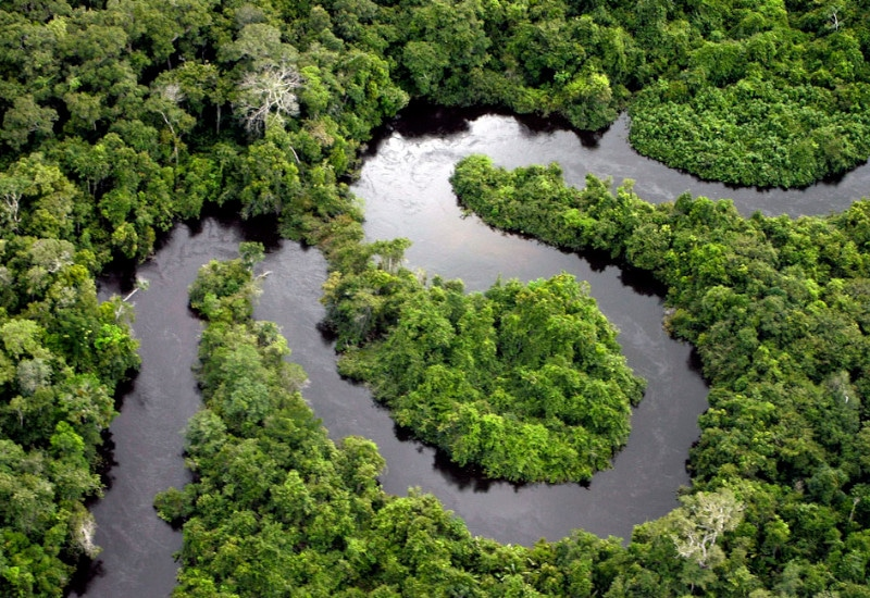 jungle brésil voyage tierra latina amazonie