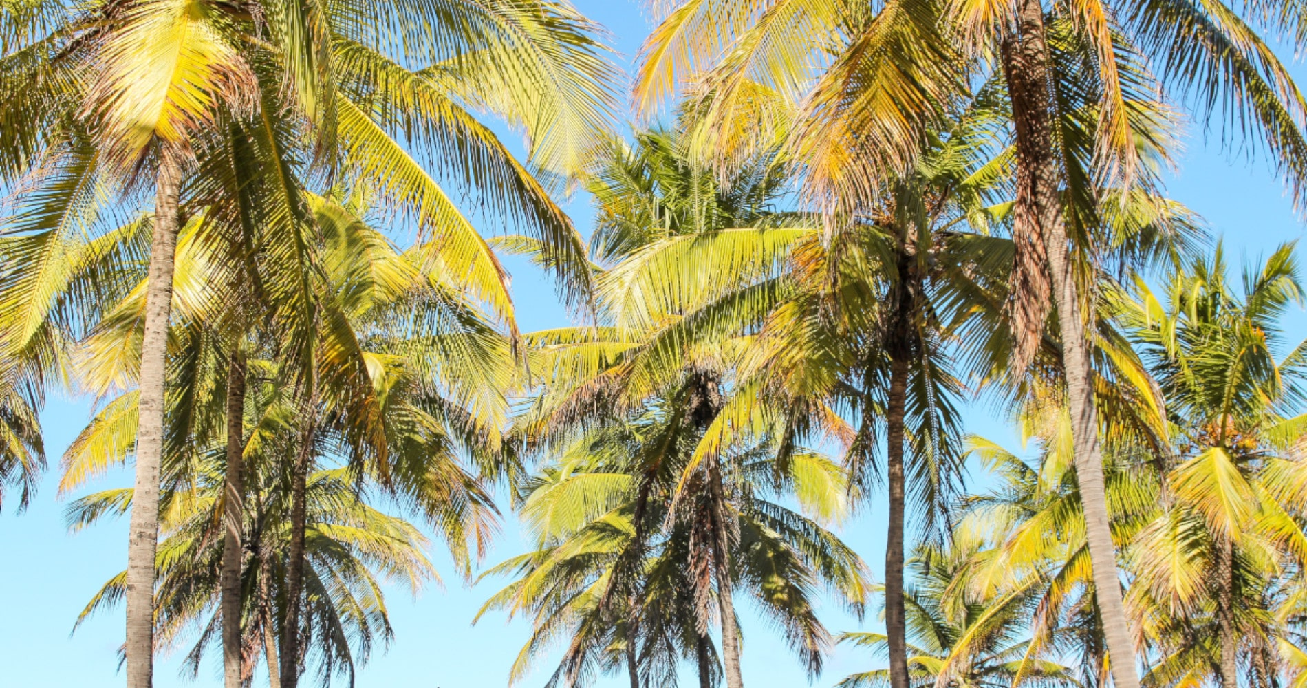 TierraLatina-Brésil-Plage-Palmier-Soleil-Vacances-Été
