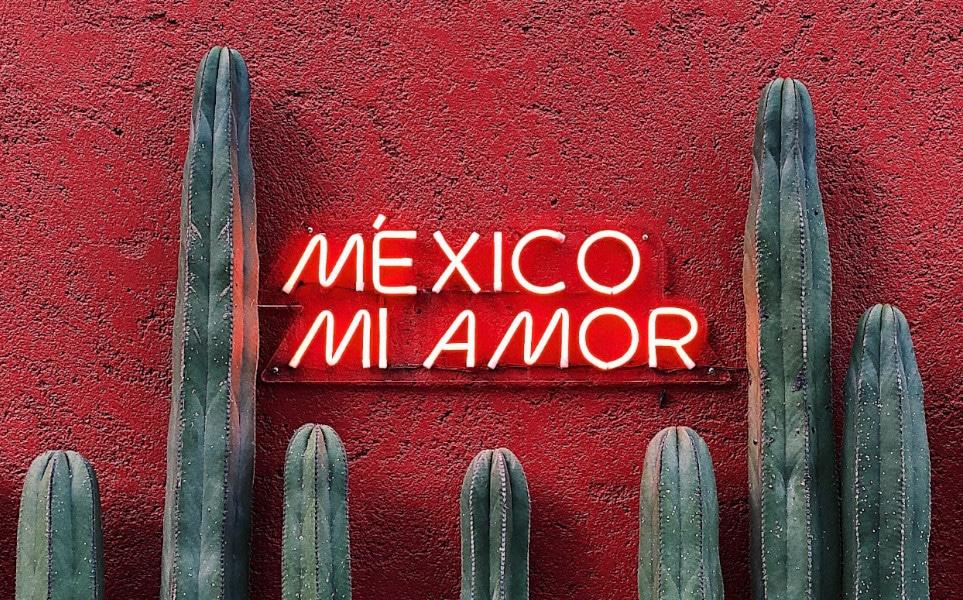 TierraLatina-Mexico-City-Mi-Amor-Cactus