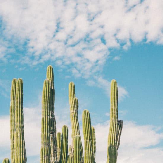 TierraLatina-Mexique-Cactus