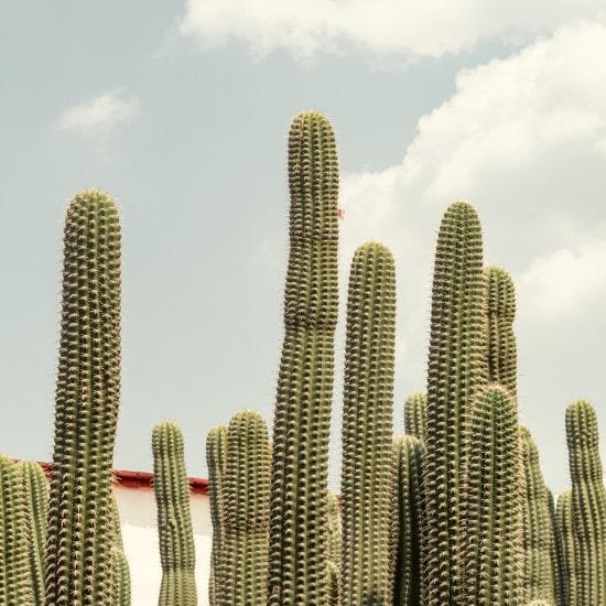 TierraLatina-Mexique-Oaxaca-Cactus-Côte-Pacifique