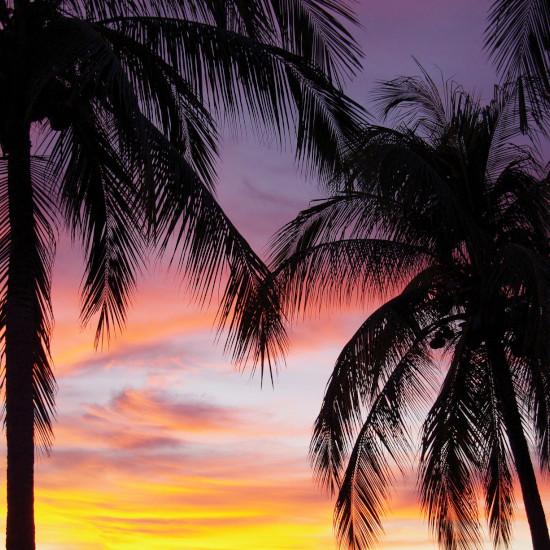 TierraLatina-Mexique-Oaxaca-Puerto-Escondido-Palmier-Coucher-de-soleil-Côte-Pacifique