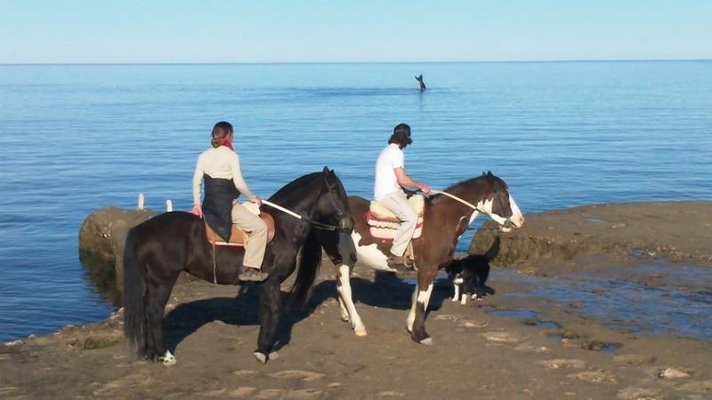 ARGENTINE-Observation-Baleines-Puerto-Madryn-Peninsule-Valdes-Criollo-de_Valdes
