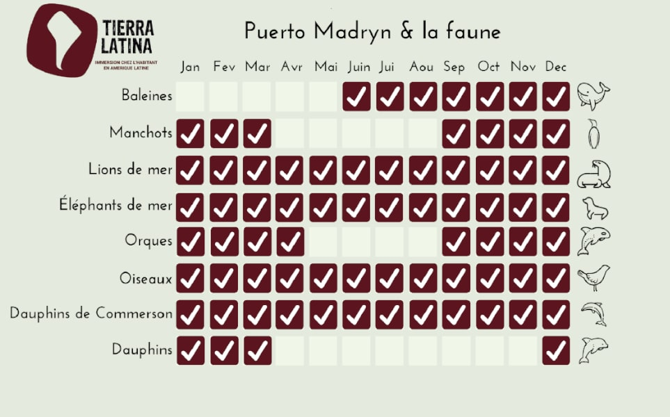 calendrier-faune-puerto-madryn-peninsule-valdes-argentine