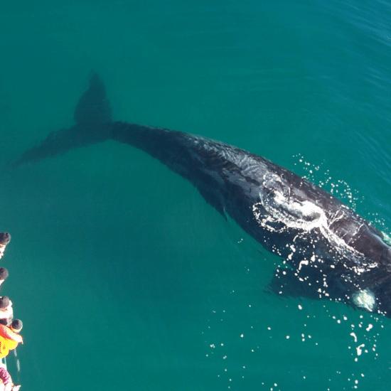 Puerto-madryn-peninsule-valdes-argentine-baleines
