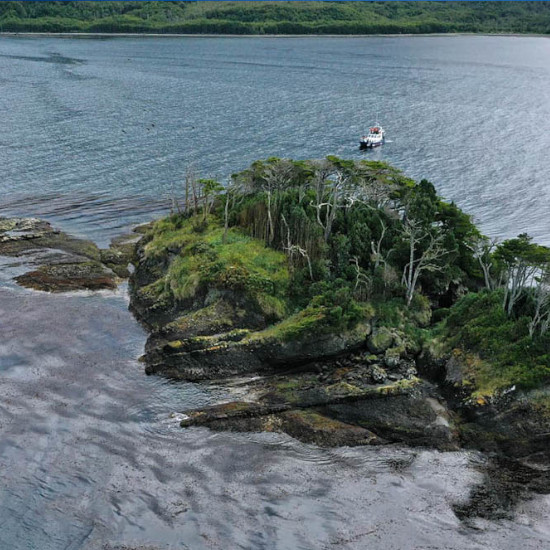 tierra-latina-observation-baleines-voyage-chili-isla-carlos-III-whalesound-séjour-amerique-latine